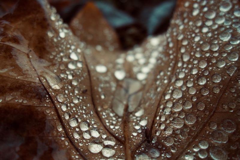 Full Frame Shot Of Water Drops On Dry Leaf
