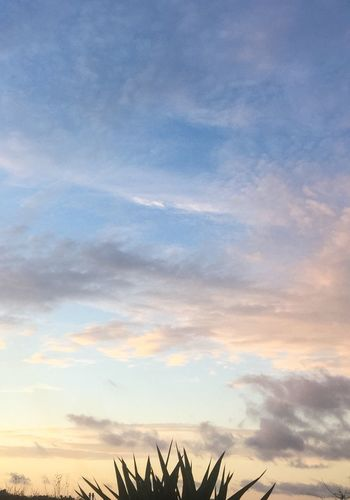 Spikey Bush Sky Sunset Colour Your Horizn