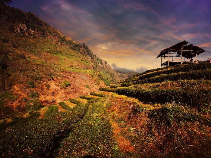 Sunset Travel Mountain Chiang Mai   Thailand DoiAngKhang,Fang,ChiangMai Thailand Beauty In Nature Natural Beauty Flawer🌸