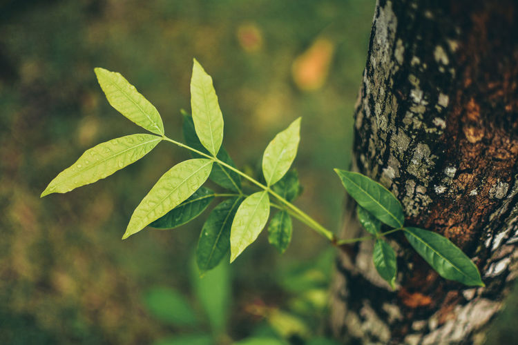 life Leaf Plant Part Plant Trunk Tree Trunk Growth Green Color Nature Focus On Foreground Close-up Tree Selective Focus No People Day Outdoors Beauty In Nature Land Field Tranquility Leaves
