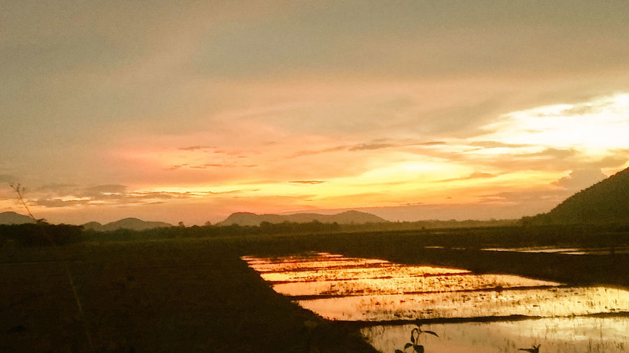 Sunset Agriculture Orange Color Nature Scenics Tranquility Sky Cloud - Sky Beauty In Nature Tranquil Scene Rural Scene Outdoors No People Water Tree Rice Paddy Day Freshness