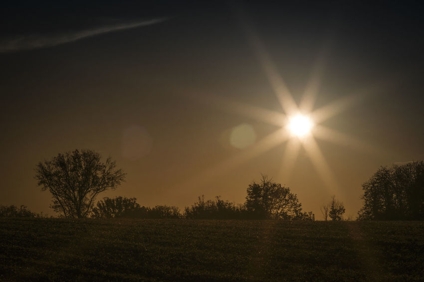 Sun Sky Plant Tranquility Tranquil Scene Tree Landscape Environment Scenics - Nature Beauty In Nature Sunlight Field Land No People Lens Flare Nature Sunbeam Grass Silhouette Growth Outdoors Bright Brightly Lit