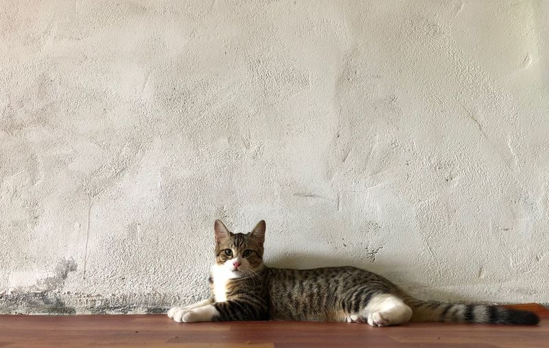 Portrait of cat resting on wall