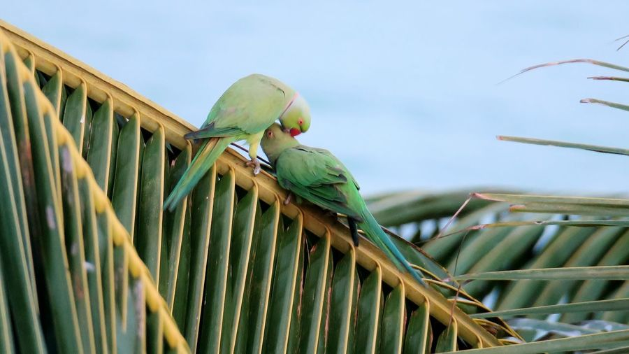Low angle view of parrot perching on palmtree