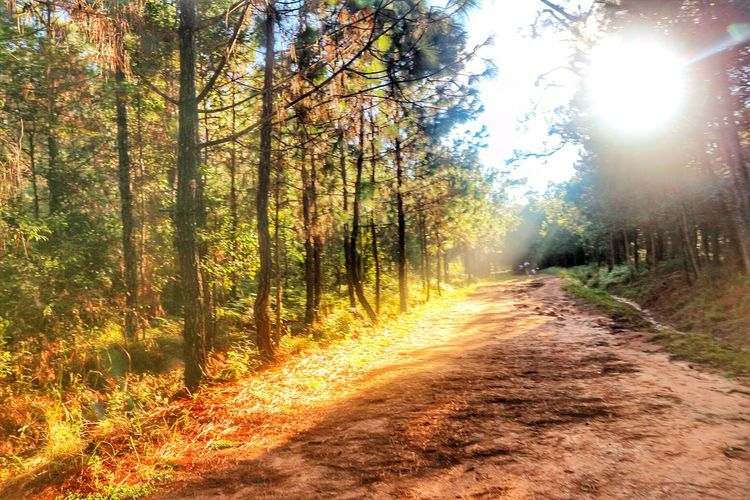 Sunbeam Sunlight Nature Tree The Way Forward Sun Road Forest No People Outdoors Tranquil Scene Day Scenics Tranquility Landscape Growth Beauty In Nature Sky