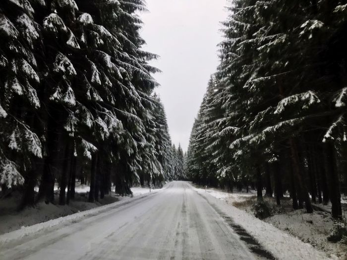 Streets Tree Plant Road The Way Forward Transportation Diminishing Perspective Direction Growth Beauty In Nature Outdoors Nature vanishing point Empty Road Sky No People Tranquil Scene Day Tranquility Treelined