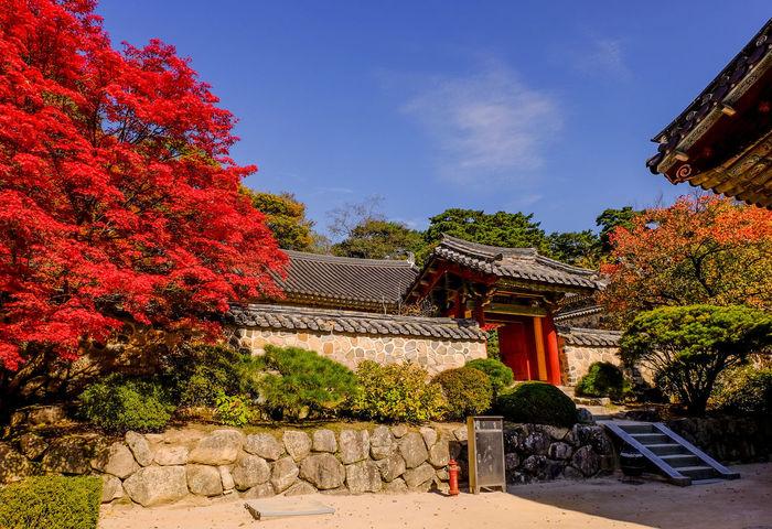 Bulguksa Temple in autumn ASIA Autumn Geongju Korea Red Travel Acient Architecture Budhist Bulguksa Colorful Day Destination Historic Landmark Nature Outdoors Sky Temple Tree Unesco