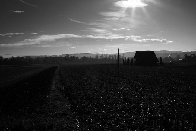 Agriculture B&w Beauty In Nature Day Field Fog Foggy Foggy Day Growth Landscape Nature No People Outdoors Plough Plowed Field Rural Scene Sky Sunlight