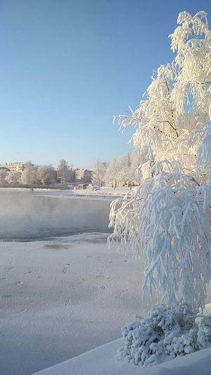 Finland Nature Wintertime Love This View Showcase: January Eyem Nature Lovers  Eyem Best Shots Snowy Tree Colour Of Life