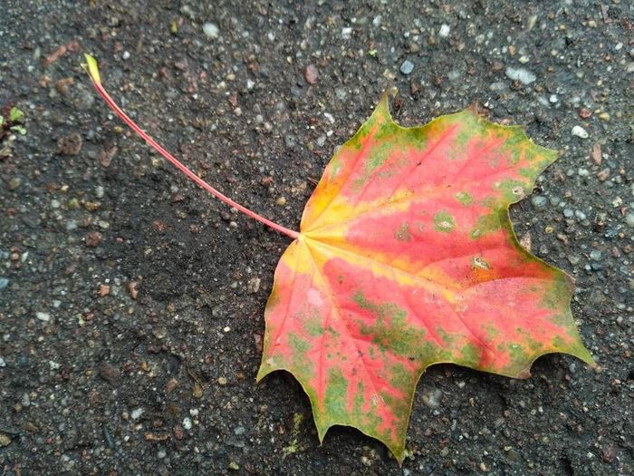 Autumn Autumn Leaves Autumn🍁🍁🍁 Leaves 🍁 Leaves🌿 Colour Of Life Colourful Simplicity Is Beauty. Simplicity On Pavement On The Ground Red And Green Red And Green Leaves Red And Green Colours