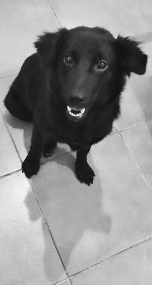 Hello! Ilovemydog Dog Black And White Weeko