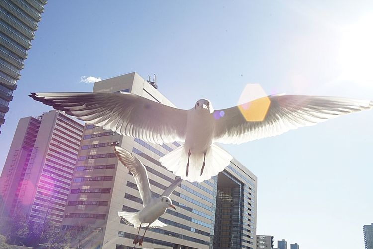 Low angle view of bird flying in city against sky