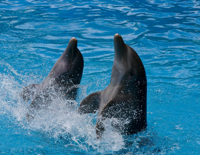 High angle view of dolphins splashing water