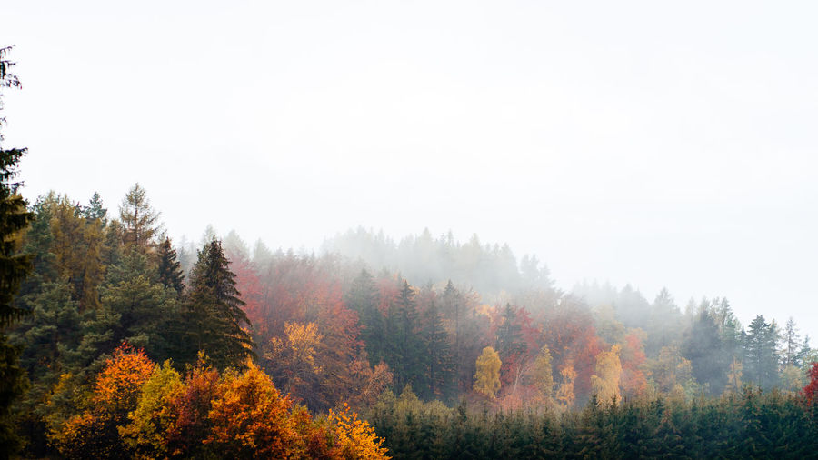 Trees in forest against sky during autumn