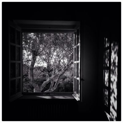 Window Tree Indoors  No People Day Home Interior Branch Nature Close-up Wakeup Summer Blackandwhite Photography Blackandwhite Light And Shadow Holiday Daylight Nature Nature Beauty Countryside Olive Tree Summertime Puglia