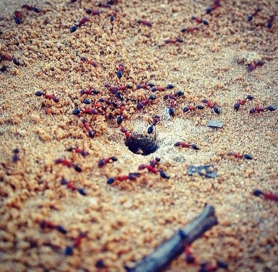 Ants University Campus Hanging Out Random Shot Evening Lovephotography  All_shots AllMine Lovely Creatures