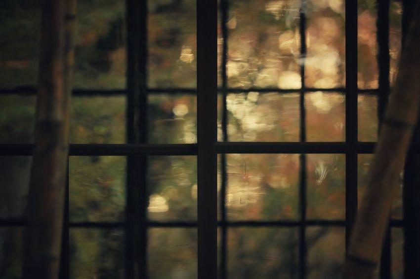 Autumn color to look through the glass🍂🍂🍂 Window Window View Window Frame Grass Autumn Autumn colors Autumn Leaves autumn mood Bamboo View Artistic EyeEm Best Shots EyeEm Nature Lover EyeEm Gallery EyeEmBestPics EyeEm Best Shots - Nature Nature Nature_collection Nature Photography Naturelovers Eyeem4photography Window Close-up Frosted Glass