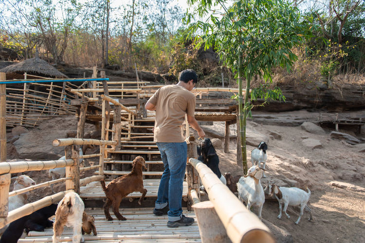 Animal Themes Animal Farm Farm Animal Eating Eating Backgrounds Nature Happy Holiday Enjoy Animals In The Wild Goat Goat Life Goat Eating Goat Farm Goat Feeding Men Outdoors Farmer Agriculture Group Of Animals Domestic Animals Rear View Pets Adult