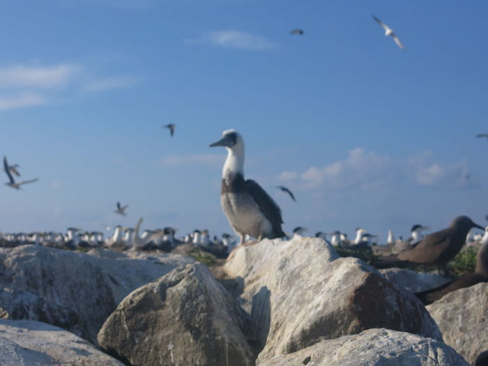 Seagulls perching on rock against sky