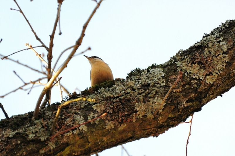 Nature Birdwatching Birds