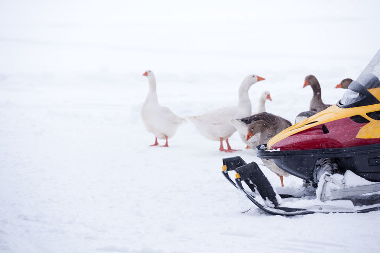 Birds Perching By Snowmobile