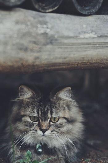 Close-up portrait of cat at night