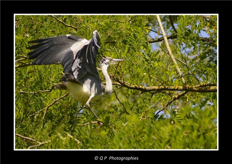 Heron Oiseau Birds Nature Nature Photography Nature_collection Canal