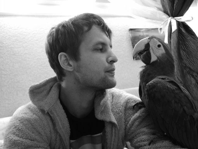 супер , ляля попугай я фото картинка лучшее интерестное