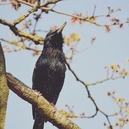 ❤️😍 Son plumage est juste magnifique! Birds Nikon5300 Disneyland