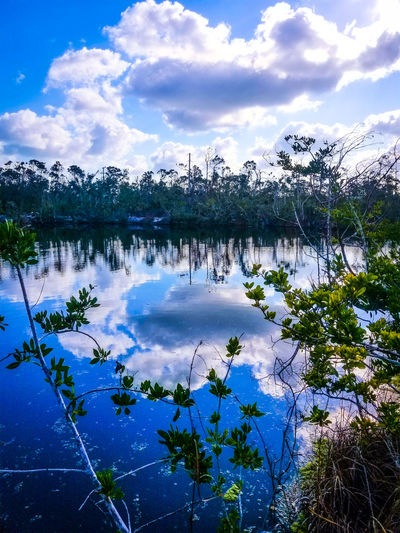 Reflections of Life Florida Keys Travel Destinations Key West Living Gulf Of Mexico Blue Water Cloud - Sky Noworries Big Pine Key Lake No People Beauty In Nature Scenics Tree