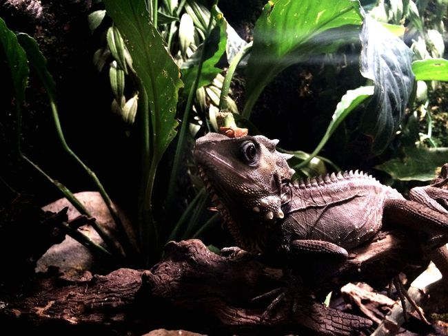 Strike A Pose! Lizard Cute Nature