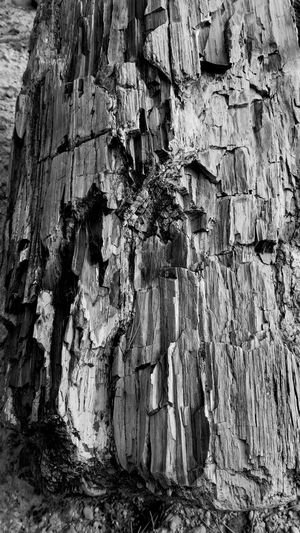 Petrified Wood Black Hills, SD South Dakota South Dakota Badlands Textured  Rough Tree Trunk Weathered No People Close-up Outdoors Nature Petrified Forest National Park Petrified Wood Petrified Forest Petrified Petrified Tree Trunk Petrified Tree Black And White Photography Black & White Black And White Collection