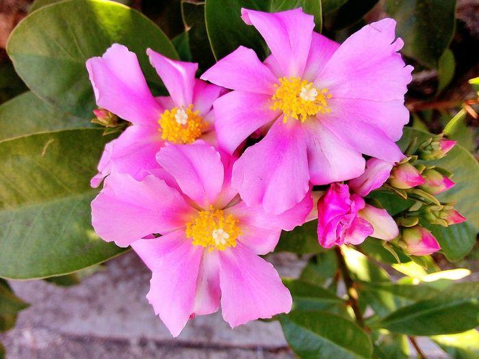 flowers on the street 🌸🌞 Flowers Wild Flowers Sunny Day EyeEm Nature Lover EyeemPhilippines