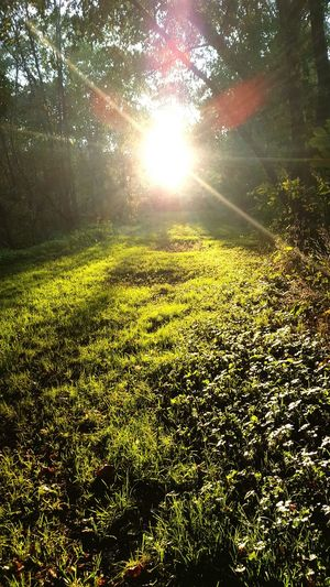 Sunlight Nature Growth Sun Scenics Freshness Tranquil Scene Tranquility Outdoors