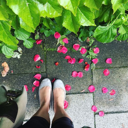 Low Section Of Woman Standing By Fallen Petals By Plants