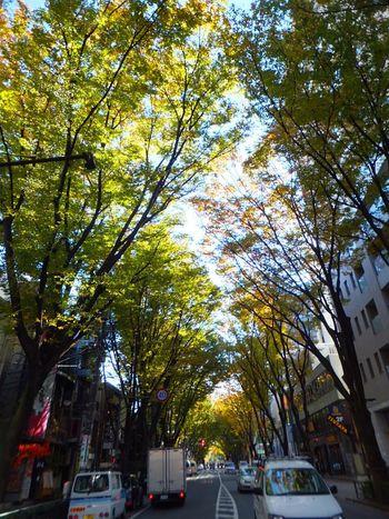 Green Town Roadside Tree