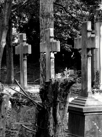 Frankfurt Am Main Friedhof Crossing Paths Overgrowth Peace And Quiet Light And Shadow Black And White Photography From Where I Stand OpenEdit Blackandwhitephotography Black And White Collection  Check This Out Up Close Street Photograpy Up Close With Street Photography From The Car Window Looking To The Other Side Croses Threes