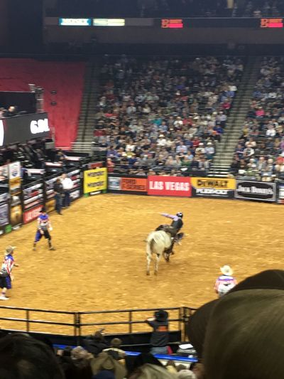 PBR Time! Pro Bull Riders! Bullriding Bull Bullrider Bullridinglove Real People Large Group Of People Domestic Animals Crowd Mammal Spectator Pets Stadium Indoors  Audience Men Day People