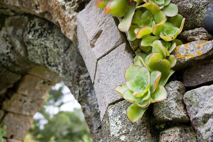Green Romantic Ruins Flowers Stone Tresco Tresco Abbey Gardens Tropical Wet
