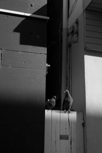 Birds perching on a building