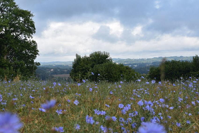 Agriculture Champs Fleur Bleu Flower Flowers