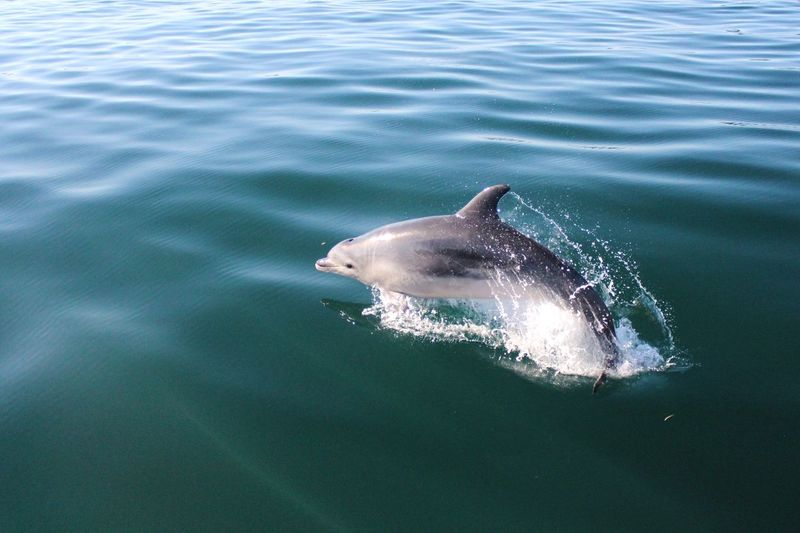 Dolphin Animal Wildlife Water Animals In The Wild Animal Animal Themes Sea Swimming Sea Life One Animal