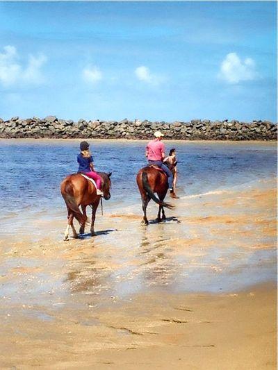 Beautiful Place Life Is A Beach Beach Photography EyeEm Best Shots Eye4photography  Beach Life I Love Horses Horses