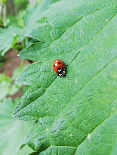 lady bug The