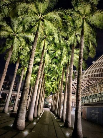 Singapore Plant Tree Growth No People Day Green Color Nature Architecture Built Structure The Way Forward City Outdoors Sunlight Transportation Shadow Road Treelined Building Exterior Street Beauty In Nature
