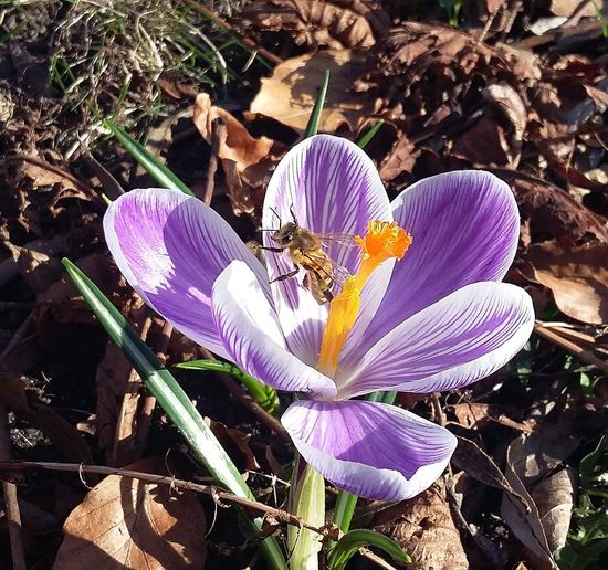 What a sunny day! Thespringcanbegin Flowers Flower Wespe Insect Sunnyday Nice Weather Nature March2017 Hamburgnaturepic Spring Is Coming  Hamburgmeineperle Hamburg