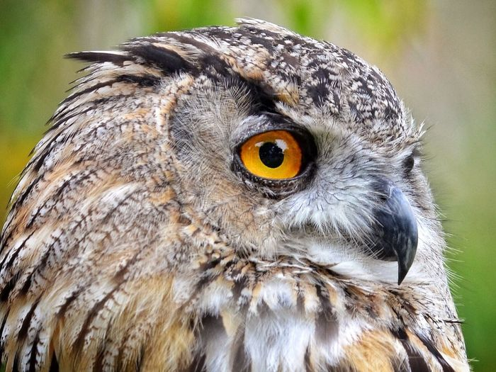 Close-Up Of Eagle Owl Perching Outdoors
