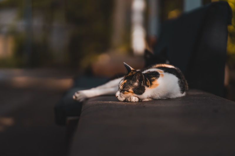 Cat sleeping outdoors