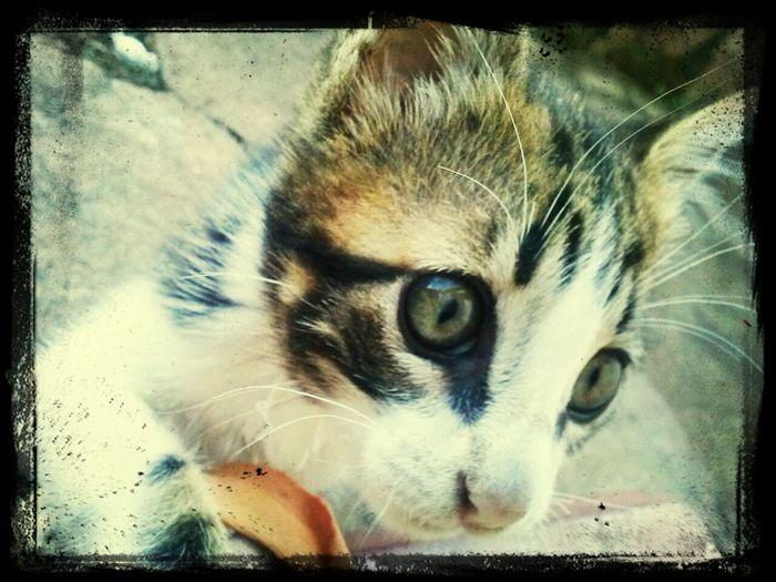 ByDreyzinhaSzczer Cat♡ Cute First Eyeem Photo