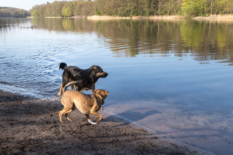 Dog on a lake